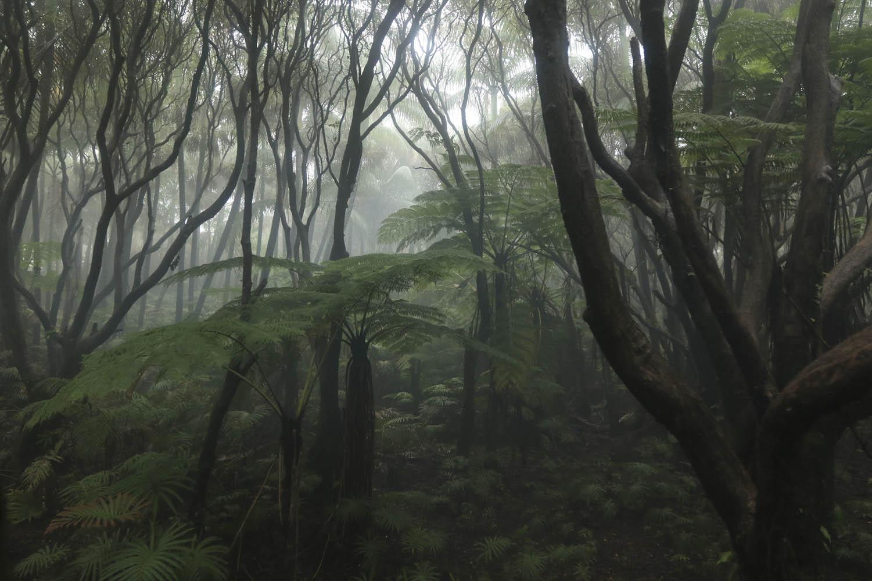 141106_26178Der Nebelregenwald der Caldera von Ambrym, Vanuatu.Cloud forest inside the Caldera of Ambrym, Vanuatu.